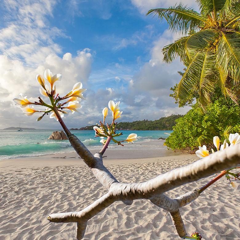 fleur de cocotier