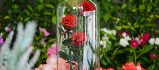 La fleur éternelle